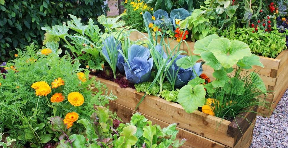 flower-and-vegetable-raise-bed-for-easy-garden-ideas-973x500.jpg